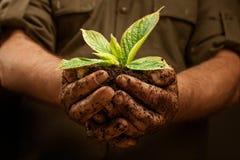 Händer av arbetarbonden som rymmer den nya unga växten Royaltyfri Bild