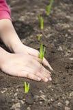 Händer av barnet som skyddar unga växter Royaltyfria Bilder