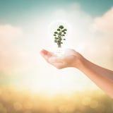 Händer av det hållande bonsaiträdet för liten flicka arkivbild
