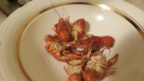 Händer av en oigenkännlig person fördelade ut en platta av röda kokta languster Ny havsmat som hemma lagas mat, är klar till arkivfilmer