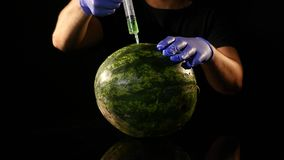 Händer av forskaren som injicerar kemikalieer in i en vattenmelon lager videofilmer
