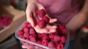Händer av hallon för en kvinnaplockning Begreppet av en antioxidant och en toppen mat arkivfilmer