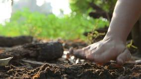 Händer av kvinnan som planterar fröt på jord som malas och bevattnas med det omgivande ljudet för natur lager videofilmer