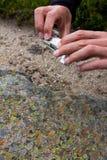 Händer av mannen som tar makrofotografiet av, vaggar mosaiken Royaltyfria Foton