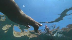 Händer av vänhandlaget under vatten lager videofilmer