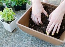 Händer blandar upp att plantera jord i fyrkantig planter Royaltyfri Foto