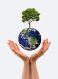 Händer, den unga grodden och vår planetjord royaltyfria bilder