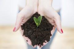 Händer för kvinna` som s rymmer den gröna lilla växten i jord för begreppstillväxt för bakgrund 3d den isolerade illustrationen f Arkivfoto