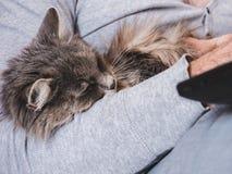 Händer för man` s, bärbar dator och en försiktig gullig kattunge Royaltyfri Fotografi