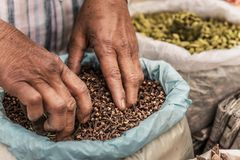 Händer för man` s och kryddakryddnejlikor royaltyfria bilder