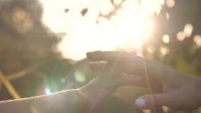 Händer för moder` som s trycker på dotter` s, fingrar i solnedgång leaves för acaciabakgrundsgreen stock video