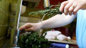 Händer för sikt för låg vinkel som kvinnliga tvättar gruppen av den nya rosmarinörten i vattenflöde Arkivfoto