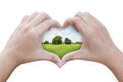 Händer i formen av hjärta med gräsfältet Arkivfoto