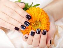 Händer med manicured kort spikar kulört med mörka lilor spikar polermedel som rymmer en blomma arkivfoton
