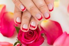 Händer med Manicured spikar fernissa som förläggas på rosor Arkivfoton