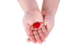 Händer rymmer en röd hjärta på vit Arkivfoton
