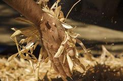 Händer som öppnar bönor Royaltyfri Foto
