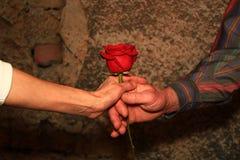 Händer som ger en röd ros royaltyfri foto