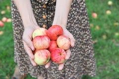 Händer som rymmer äpplen Royaltyfria Foton