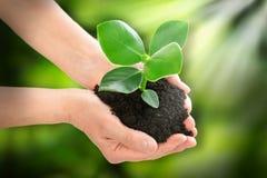 Händer som rymmer begrepp för växtekologi royaltyfri fotografi