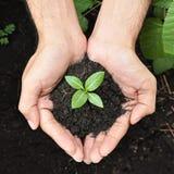Händer som rymmer den gröna plantan med jord Arkivbild