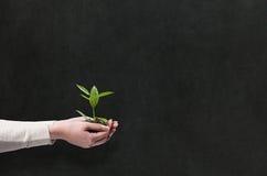 Händer som rymmer den gröna växten Arkivfoton