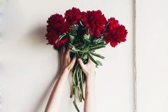 Händer som rymmer den härliga röda pionbuketten på lantlig vitbac Arkivfoton
