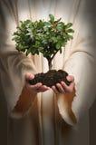 händer som rymmer den jesus treen Royaltyfri Foto