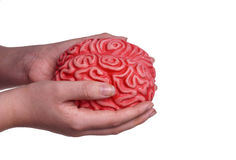 Händer som rymmer den mänskliga hjärnan Arkivbild