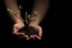 händer som rymmer den nya växten arkivbild
