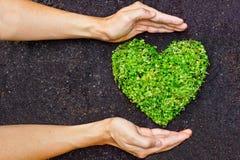 Händer som rymmer det grön hjärta formade trädet royaltyfria foton
