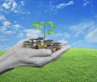 Händer som rymmer det nya gröna trädet som växer på mynt över grönt gräs Arkivfoto