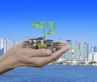 Händer som rymmer det nya gröna trädet som växer på mynt över stadstorn Royaltyfria Foton