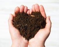 Händer som rymmer en jordhjärta på vit bakgrund Ekologiconcep Arkivfoton