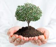 Händer som rymmer ett träd med pengar Arkivfoto