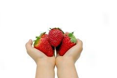händer som rymmer jordgubbar Arkivfoton