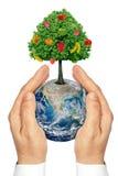 Händer som rymmer planetjorden med ett träd och en frukt. Royaltyfria Bilder