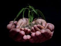 händer som rymmer plantan royaltyfria foton