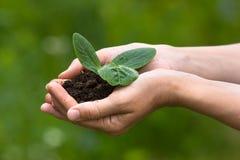 Händer som rymmer plantan med jord Royaltyfri Foto