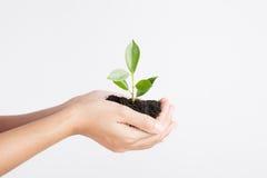 Händer som rymmer plantan på vit bakgrund Royaltyfri Foto