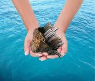 Händer som rymmer staden över havet royaltyfri bild
