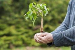 händer som rymmer treen Royaltyfri Foto