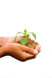 Händer som rymmer växten Arkivbilder