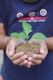 Händer som rymmer växten Arkivfoto