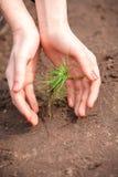 Händer som täcker grodden av det nya trädet i jord Royaltyfri Fotografi