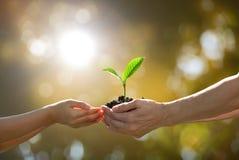 Händer som tillsammans rymmer en grön ung växt Arkivfoton