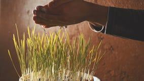 Händerna bevattnar gräset inomhus arkivfilmer