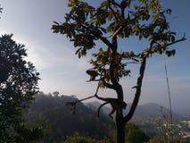 Hänga för apa Arkivfoton