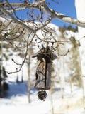 hänga för birdhouse som är trä royaltyfri bild