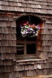 hänga för blommor Fotografering för Bildbyråer